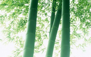 wallpapers-bamboo-light-store-136280